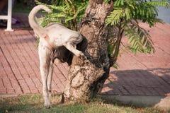 A dog peeing on tree