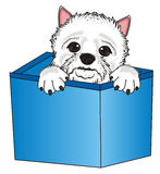Dog peek up from box Stock Images