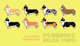 Dog Pembroke Welsh Corgi Coloring Variations Vector Illustration Stock Image