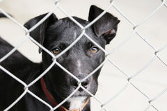 Dog in a pen. Homeless animals series. Black pup looking out through the wires of his pen stock image
