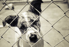 Dog in a pen. Sad pup looking out from behind the mesh of his pen. Cross processed image royalty free stock image