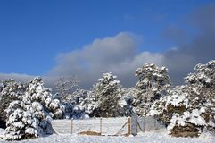 Dog Pen in Winter Royalty Free Stock Photo
