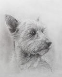 Dog pencil drawing on old paper, vintage paper. Dog portrait. Royalty Free Stock Photo