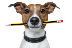 Dog with pencil and eraser. Dog with pencil and red eraser Stock Photos