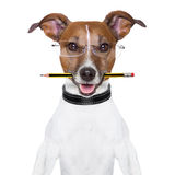 Dog pencil Royalty Free Stock Photos