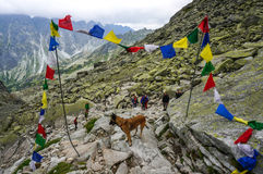 A dog and people hiking in line on the path descen Stock Image