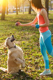Dog performs commands of woman. In park during day Royalty Free Stock Image