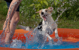 Dog and person splashing Stock Image