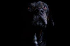 Dog_Pet_Animal 免版税库存图片