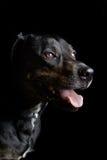 Dog_Pet_Animal_Canian Stock Photo