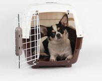 Dog in the pet carrier Stock Images