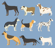 Dog pet character bread in flat style puppy pet animal doggy vector illustration. Royalty Free Stock Photo