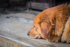 Dog pet depressive disorder stock image