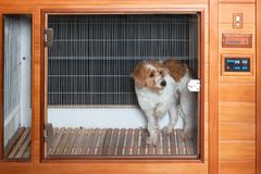 Dog in a pet dryer. An image of a dog in a pet dryer royalty free stock photography
