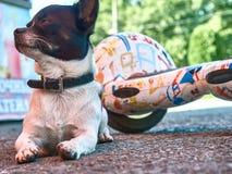 Dog Pet Guardian Guardian Friend Stock Photos