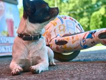 Dog Pet Guardian Guardian Friend Stock Photo