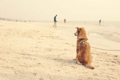 The dog pet sitting on the beach. royalty free stock images