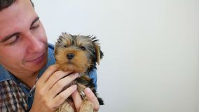 Dog pet Yorkshire terrier licking man friendship love stock video footage
