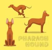 Dog Pharaoh Hound Cartoon Vector Illustration Stock Photos