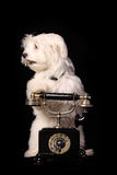 Dog phone Stock Images