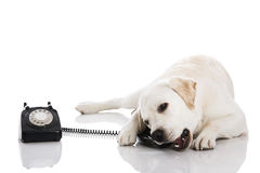 Dog and phone Stock Photography