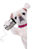 Dog on the phone with a can. Royalty Free Stock Images