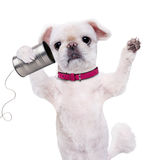 Dog on the phone with a can. Stock Photo