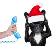 Dog on the phone christmas santa hat Royalty Free Stock Photos