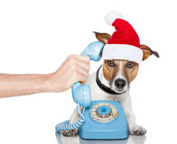 Dog on the phone christmas santa hat Stock Photography