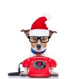 Dog on the phone christmas santa hat royalty free stock photos