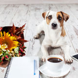 Dog with phone and coffee. Notebook with pen for planning. Coffee, phone, flowers and dog Royalty Free Stock Photo