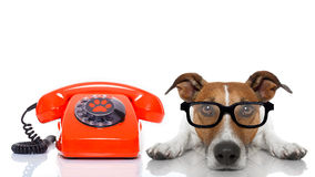 Dog on the phone. Jack russell dog with glasses as secretary or operator with red old  dial telephone or retro classic phone Royalty Free Stock Photography