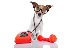 Dog on the phone stock image