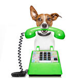 Dog on the phone Royalty Free Stock Photos