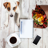 Dog with phone, notebook and coffee. Notebook with pen for planning. Coffee, phone, flowers and dog Royalty Free Stock Photos