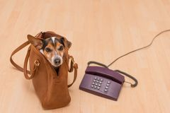 Dog and phone ready for communication royalty free stock photo