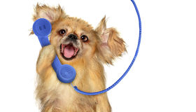 Dog with phone Royalty Free Stock Image