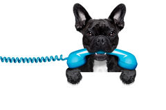 Dog phone telephone Stock Image