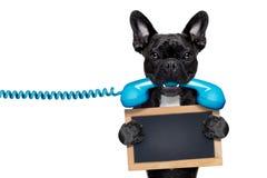 Dog phone telephone Stock Images