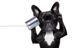Dog phone telpehone Royalty Free Stock Photos