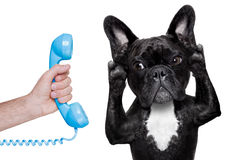 Dog phone telpehone Stock Image