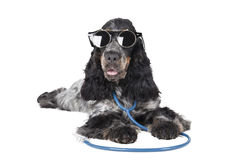 Dog with a phonendoscope and glasses Stock Photos