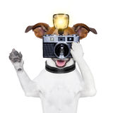 Dog photo. Dog taking a photo with an old camera and flashgun stock image