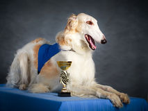 Dog Royalty Free Stock Photo
