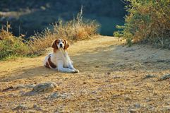 Dog. Photo session dog on nature Royalty Free Stock Photo