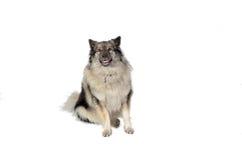 Dog in the photo studio Stock Photo