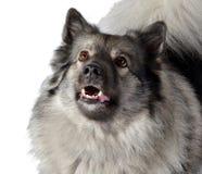 Dog in the photo studio Stock Photos