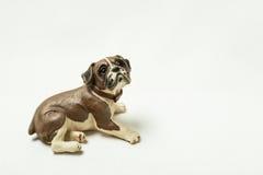 Dog photographed on a light background. Lying dog photographed on a light background royalty free stock photo