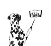 Dog photographed selfie on the phone Royalty Free Stock Photography