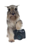Dog photographer Royalty Free Stock Photography